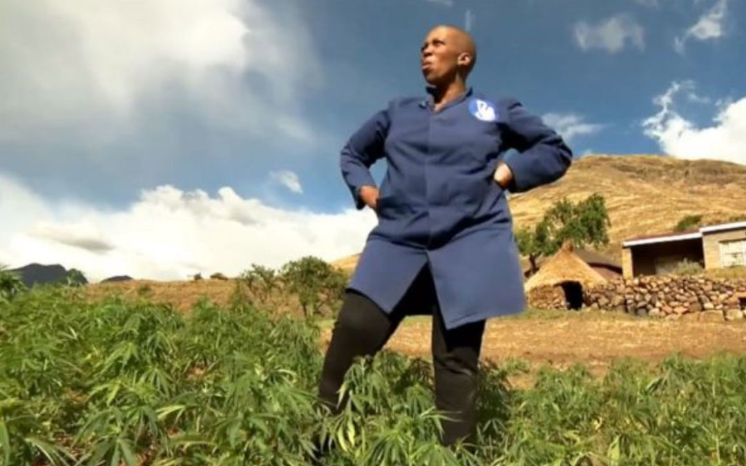 Marijuana, mountains and money: How Lesotho is cashing in