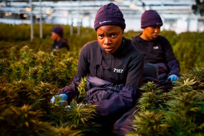 One African Country Wants to Send Its Legal Marijuana All Over the World